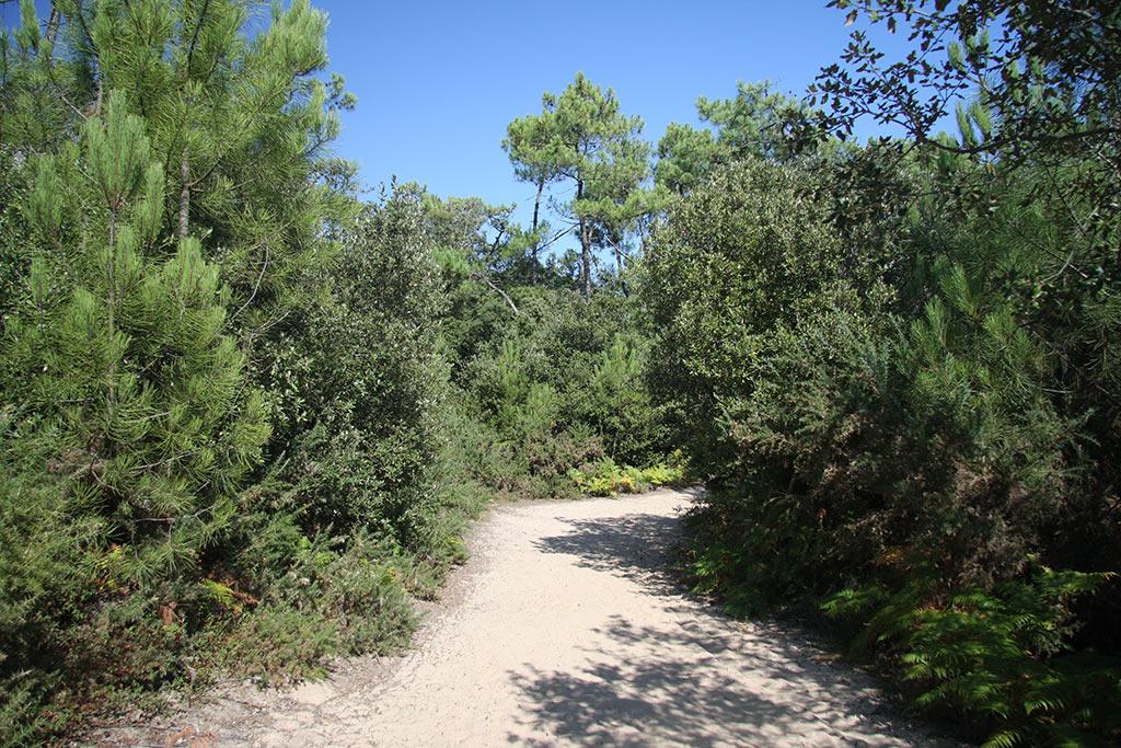 la forêt de Jard