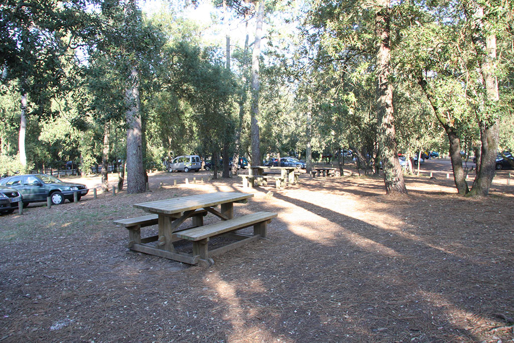 Aire de pique-nique en forêt